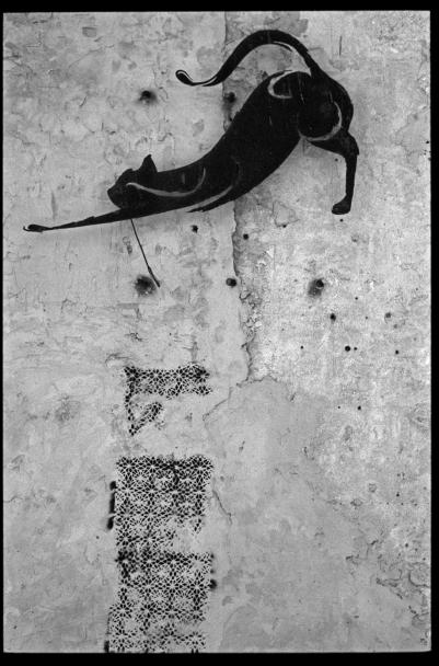 F32_N26_Cat_Jaffa