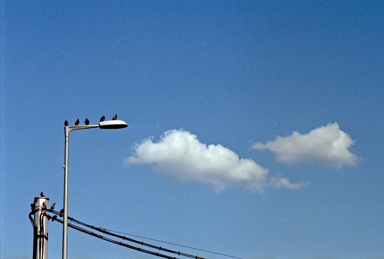 F67_N25_pigeons